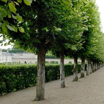 Linde, Chateau de Villandry