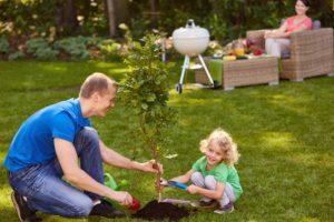 Beste tijd om bomen te planten