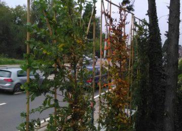 Herfst bomen planten