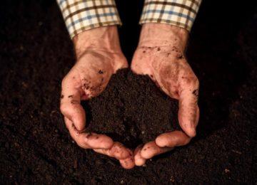 Quality soil in male gardener hands